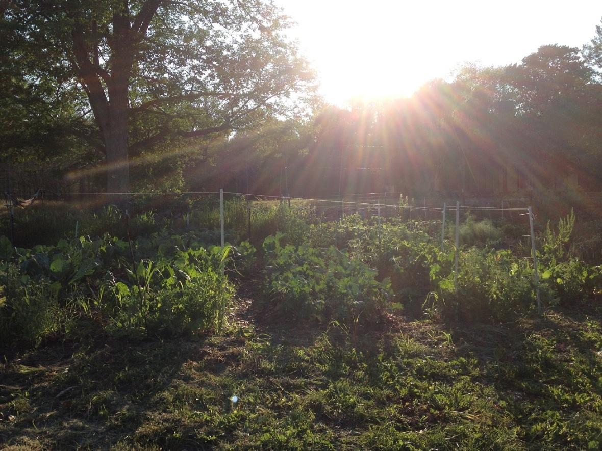 garden after weeding July 2016
