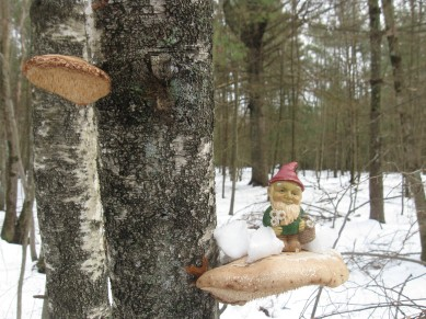 snow-gnome