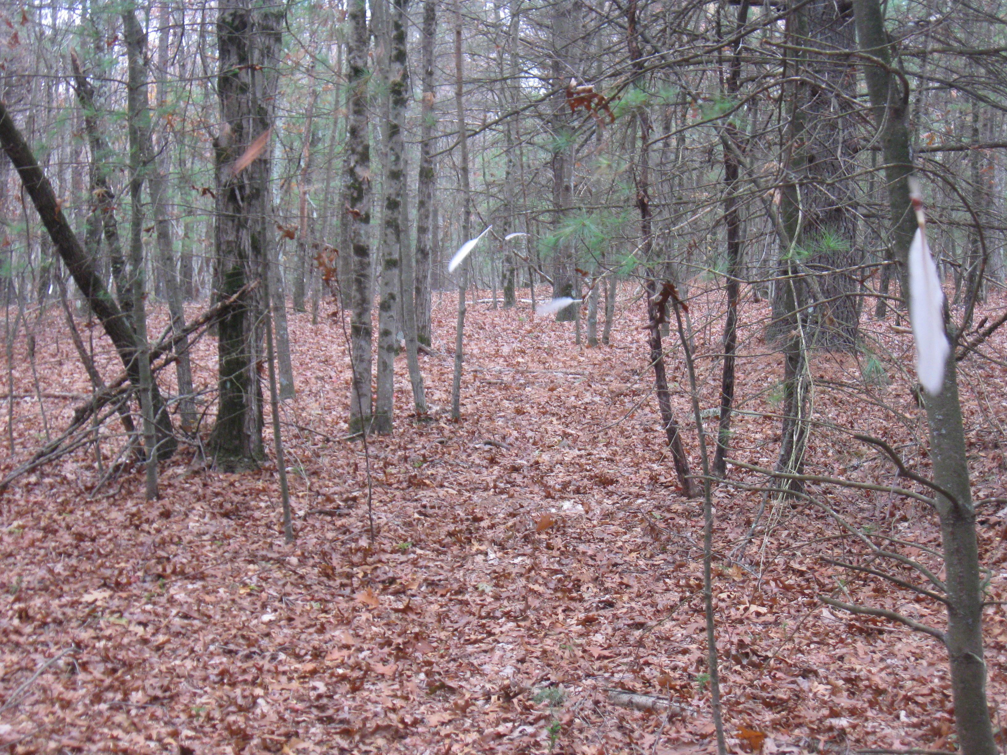 trail to Pip's Chepachet home