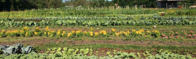 cropped-raised-beds-of-hocus-pocus.jpg